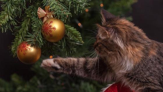 Кошка играет с игрушкой на елке