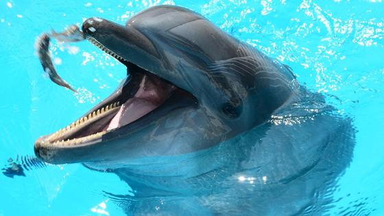 Дельфин купается