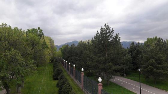 деревья на фоне туч