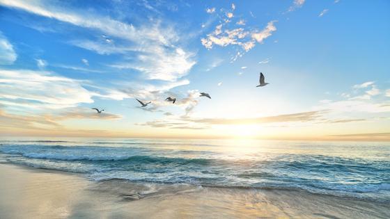 море и птицы