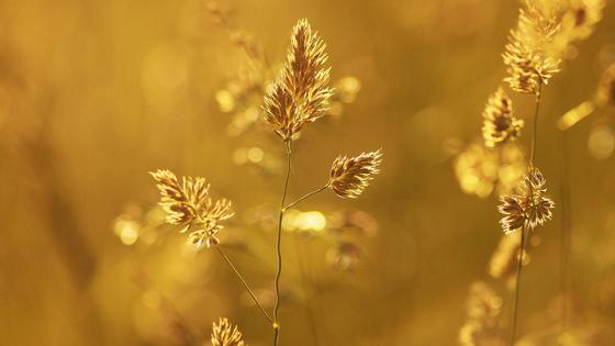 Растение под лучами солнца