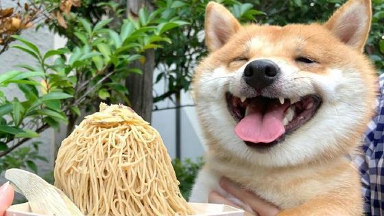 щенок радуется при виде еды