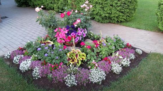 Клумба с разноцветными цветами