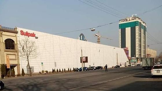 Вырубленные деревья в центре Алматы