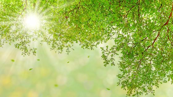 Солнце светит сквозь листву