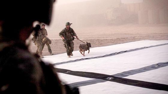Американский военный держит собаку на поводке