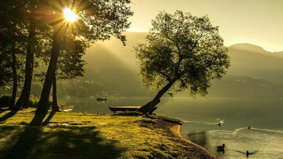 деревья растут на берегу озера