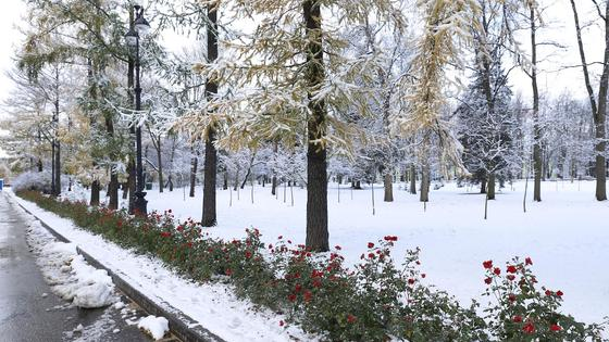 деревья в парке засыпало снегом