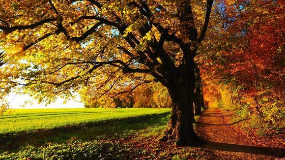 Подлесок осенью