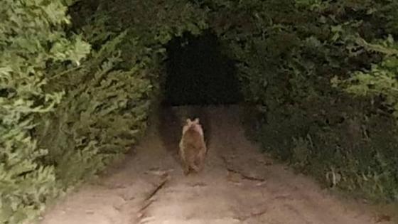 Медведь в Серебрянске