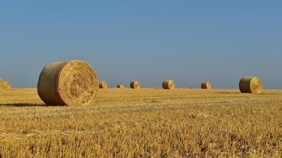 Соломенные кипы на поле
