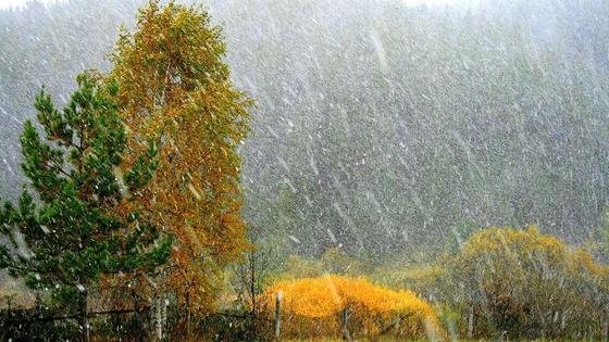 Снег заметает пожелтевшие деревья