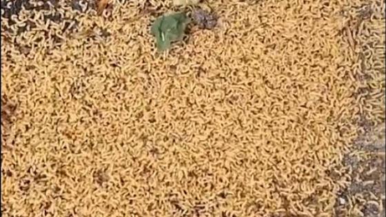 Большое количество личинок на земле в Алматы