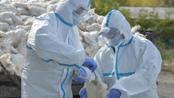 Два человека в защитных костюмах держат в руках птицу