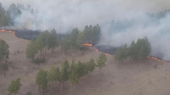 Пожар в сосновом бору в Павлодарской области