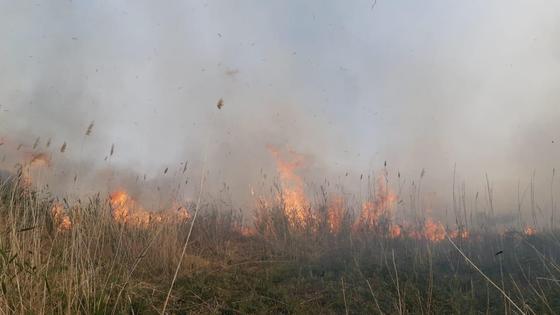 Сухостой горит в Нур-Султане