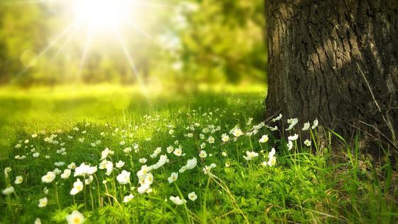 зеленая трава растет возле дерева