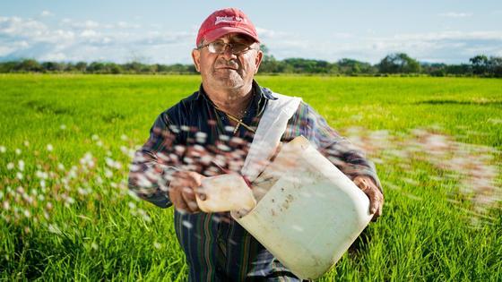 Мужчина сеет зерно в поле