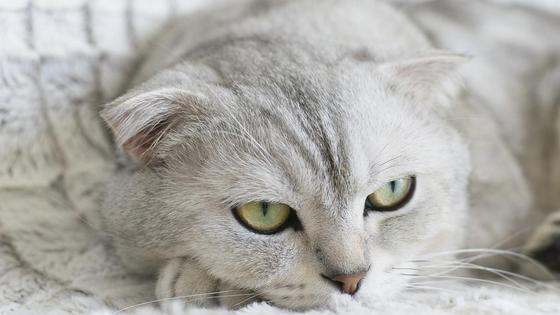 белая кошка на покрывале