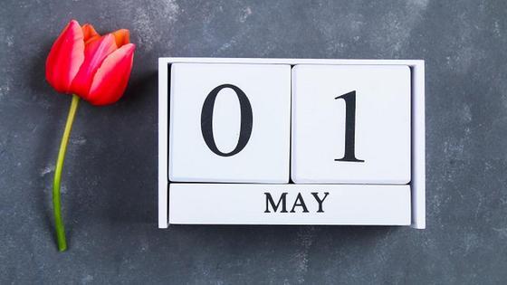 Календарь с 1 мая и красный тюльпан