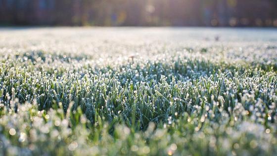 Зеленая трава покрыта инеем