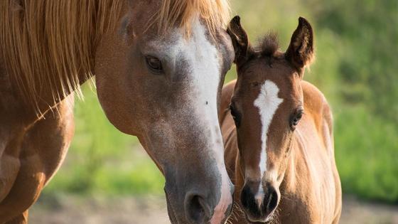 Лошади стоят на поле