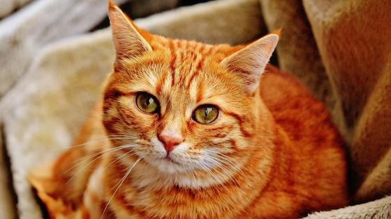 Тест «Какой ты кот» пройти