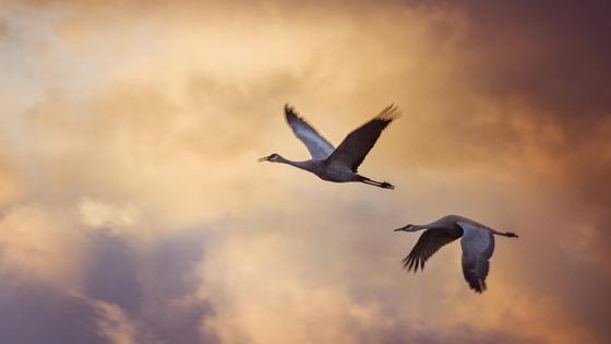 Две птицы летят на фоне закатного неба