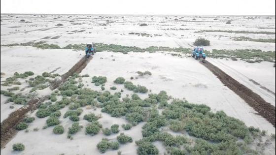 Спецтехника едет по высохшему дну Аральского моря
