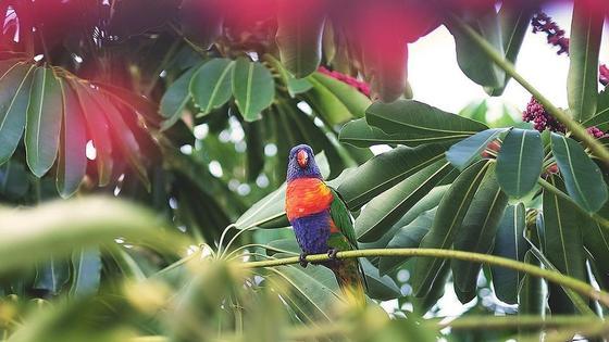 попугай на ветвях
