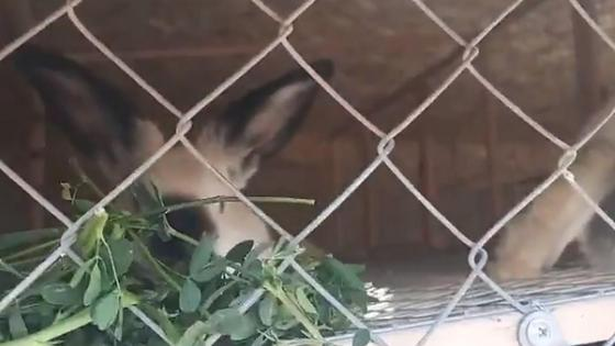 Животное в клетке зоопарка