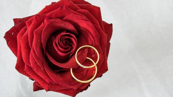 Обручальные кольца на красной розе