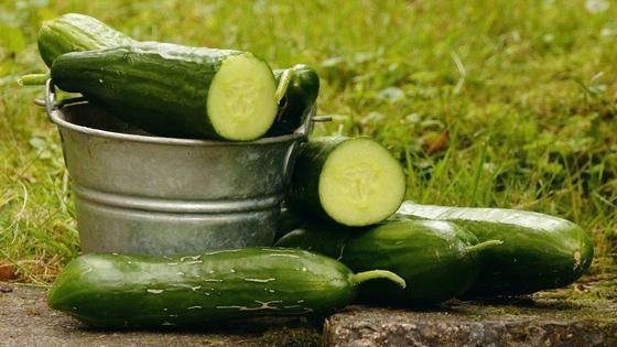 Зеленые длинные огурцы со срезами в ведре и на земле