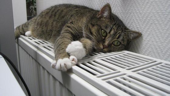 Кошка лежит на батареях
