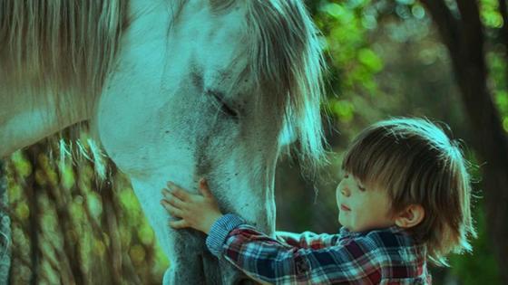 малыш и лошадь