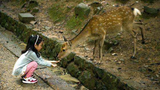 Парк Нара в Японии