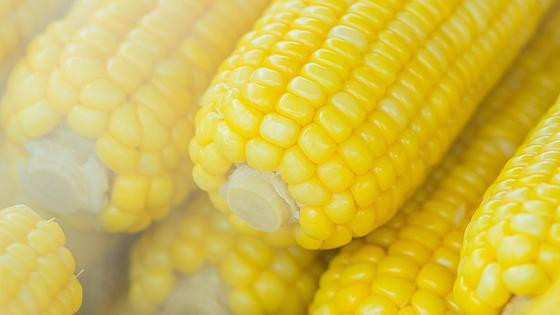 Початки кукурузы
