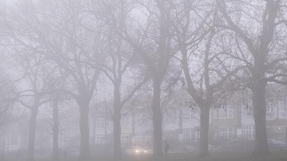 Деревья и здания в тумане