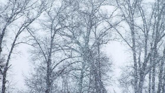 деревья стоят под снегом