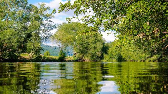 Река на фоне деревьев