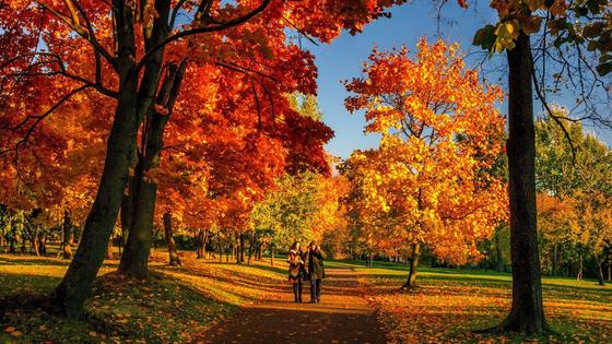 две девушки идут по осеннему парку