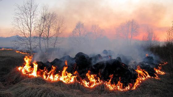 Огонь расходится по сухой траве в поле