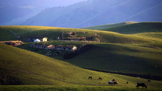 Скот пасется близ села