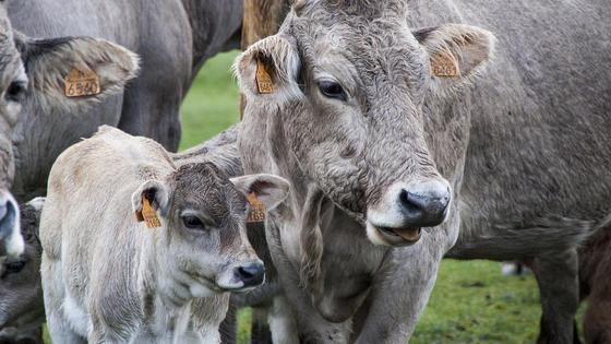 Животноводство в Мангистауской области