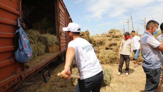 Сено готовят к отправке в Туркестанской области