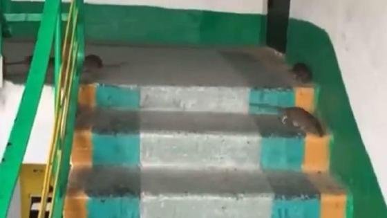 Крысы в подъезде в Темиртау