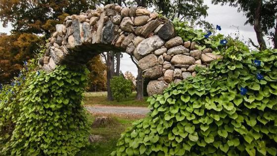 Каменная арка заросла вьющимися растениями