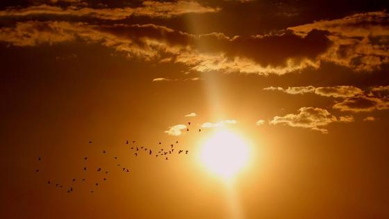 Небо и птицы