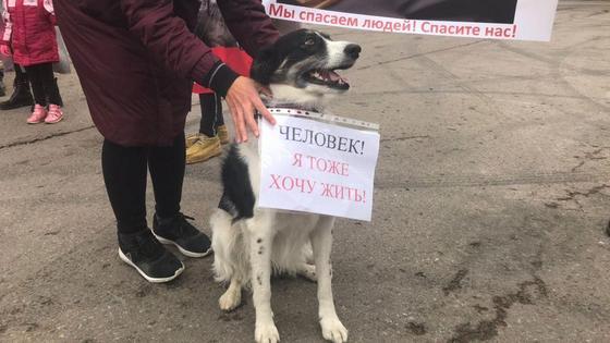 Человек стоит рядом с собакой и держит плакат