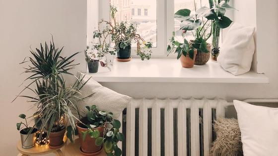 Окно в квартире с комнатными растениями